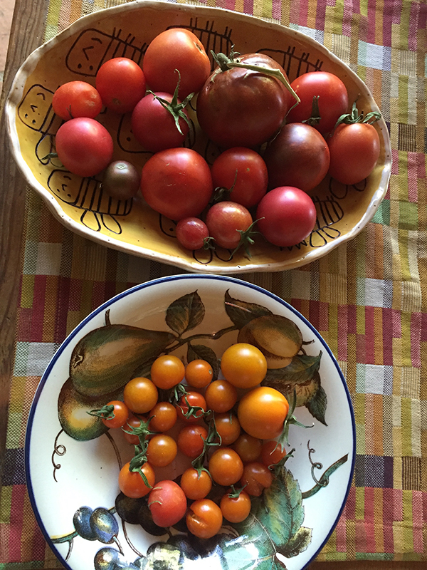 tomatoes_first harvest
