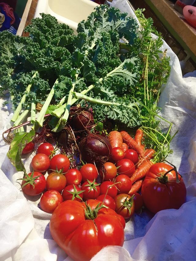 fall-harvest-crop_nov-2