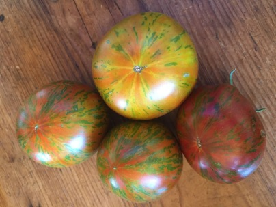 wild boar farms tomatoes in The Tomato Lady's garden
