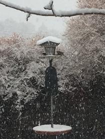 Birds enjoying the bird feeder on a snowy day