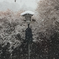 Birds enjoying the bird feeder on a snowy day