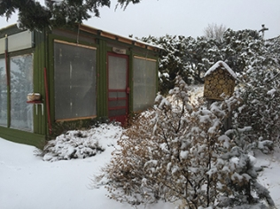 The UNHEATED greenhouse still has some radishes, beets and carrots in it onDec 26