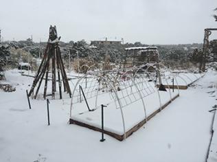 Hard to believe this is the veggie garden on Dec 26