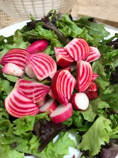 CHiogga beets are striped inside