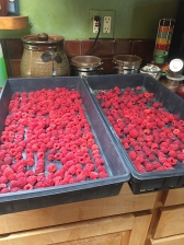 Polana raspberries
