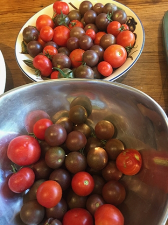 Black cherry tomatoes and Santorini tomatoes