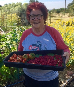 me-The Tomato Lady with harvest