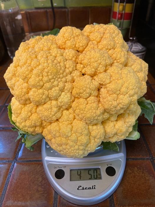 cauliflower_cheddar